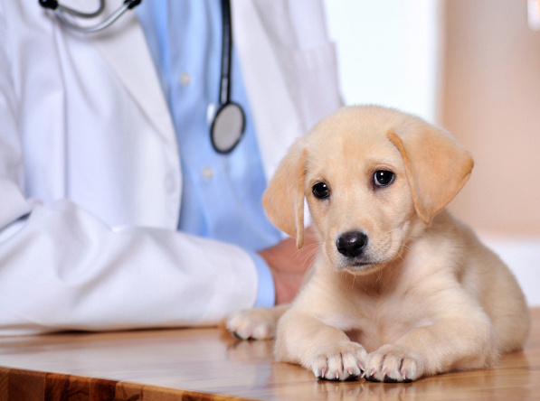 Yuma, AZ. Pet Clinic Insurance